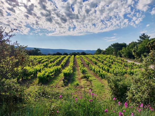 moderne villa huren met 6 slaapkamers, airco en verwarmd zwembad in Zuid-Frankrijk, Provence, Vaucluse, Bédoin